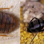 pest control service brisbane companies